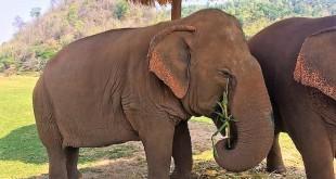 elephant-nature-park-chiang-mai-photo6